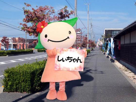 0356しぃちゃん